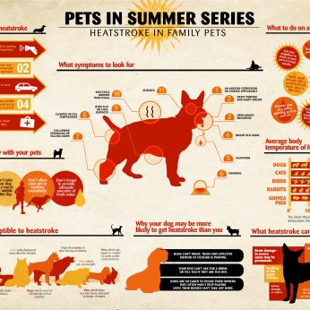 Heatstroke in Dogs & Pets Infographic