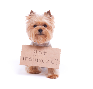 Why Pet Sitting Insurance is Important