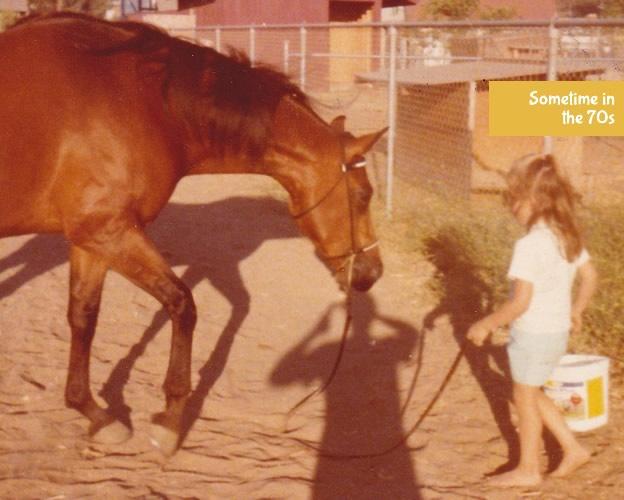 Polly - Arabian Show Horse