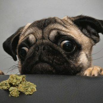 Dogs, Cats & Weed