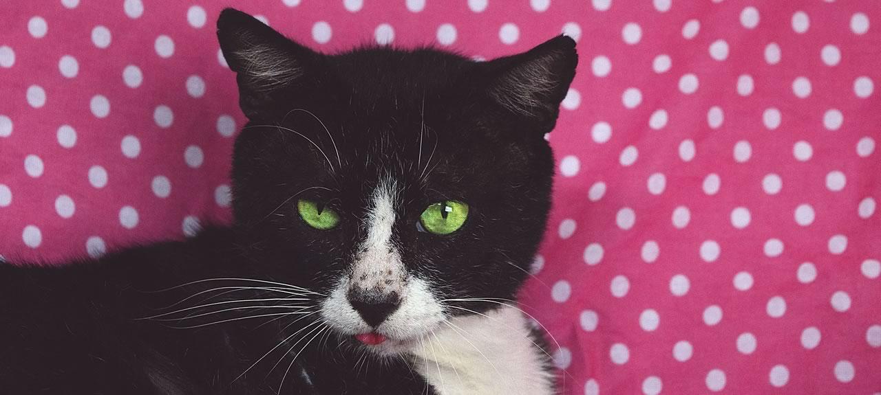 South Austin TX Cat Sitter