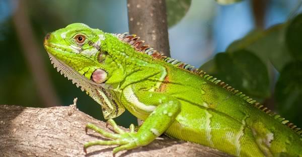 Minnetonka Reptile Sitter